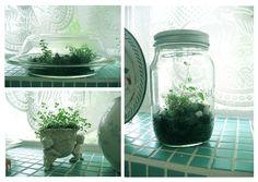 1000 bilder zu garten im glas auf pinterest terrarium sukkulenten und sukkulentengarten. Black Bedroom Furniture Sets. Home Design Ideas