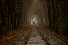 locomotive in the woods