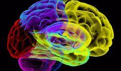 """Las neuronas son la esencia del """"yo"""" - Un día más culto"""