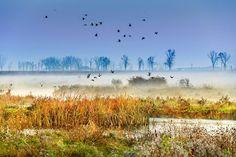 Neajlov Delta, Comana Natural Park, Romania (by Sorin Onisor) Turism Romania, Natural Park, London Travel, European Travel, Travel Destinations, Greece, Spain, Germany, Mountains