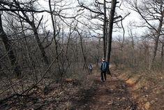 Budapest, Hiking, Country Roads, Walks, Trekking, Hill Walking