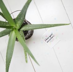 TheGiftLabel: I Love Your Awesomeness Confetti Cards, I Love You, My Love, Aloe Vera, Amsterdam, Herbs, Awesome, Te Amo, Je T'aime