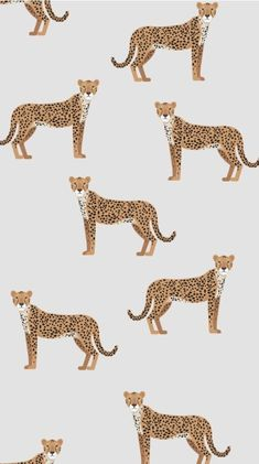 Cheetah Print Wallpaper for Bedroom . Cheetah Print Wallpaper for Bedroom . Collage Des Photos, Photo Wall Collage, Picture Wall, Collage Ideas, Illustration Inspiration, Illustration Art, Illustrations, Textures Patterns, Print Patterns