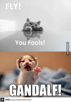 Run you fools!