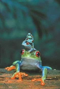 five frogs sitting on top of each other