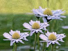 'stocking up on some sunshine' von ursfoto bei artflakes.com als Poster oder Kunstdruck $16.63