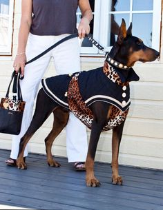 The Doberman Pinscher is among the most popular breed of dogs in the world. Known for its intelligence and loyalty, the Pinscher is both a police- favorite Doberman Pinscher Blue, Blue Doberman, Doberman Love, Dog Clothes Patterns, Coat Patterns, Great Dane, Dog Coats, Pet Clothes, Dog Accessories