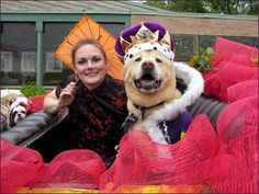 """Ruling dogs of China"" - Battle of flowers parade. El Rey Fido winner 2010, Dingo."