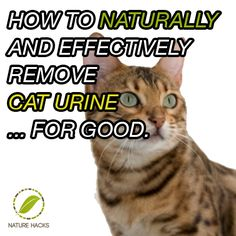 how to naturally and effectively remove cat urine - Vinegar first - hydrogen peroxide second.  I have used vinegar for years and swear by it.   not only for cat urine but for that musty smell in towels, etc. The hydrogen peroxide is something I also use but haven't tried it in this particular combination.