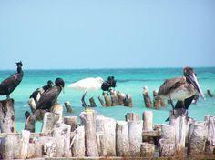 Foto de Isla Holbox, Quintana Roo