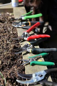 Pruning shears are one of the most hardworking tools you have in your garden. To care for your pruners and ensure that they are safe for both your plants and you'll want to clean and then sharpen your...