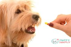 Joints can become stiff or painful, and suddenly your always hyperactive, happy dog spends more and more time hanging out. The best joint supplements for dogs New Things To Learn, Cool Things To Buy, Best Farm Dogs, Joint Supplements For Dogs, Amazon Work From Home, Some Love Quotes, Free Facebook Likes, Dog Separation Anxiety, Cool Gadgets To Buy