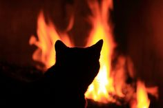 Sitting by the fire | Flickr - Photo Sharing!