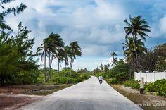 La route de ceinture de l'atoll de Fakarava. Face à l'entrée de la ferme perlière, la circulation est dense ce jour là !