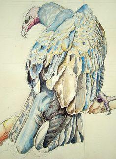 Blue Vulture by EllisonIllustrations.deviantart.com on @DeviantArt