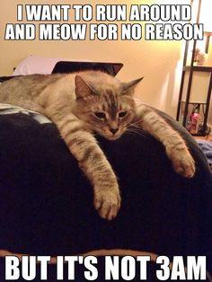 First world cat problems - Imgur
