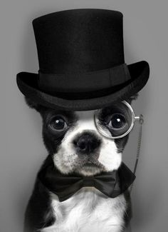 Dapper Boston