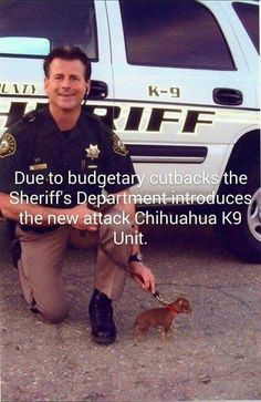 Omg I love this!!! Officer Chihuahua Bad Ass! #chihuahuadaily #teacupdogs #teacupchihuahua                                                                                                                                                      More
