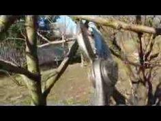 potatura di produzione del pesco - YouTube