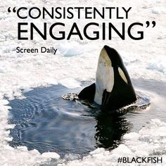 Black Fish. Due for release in theaters. Magnolia Films.