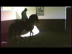 Nuno Oliveira - Piaffe en arrière - YouTube
