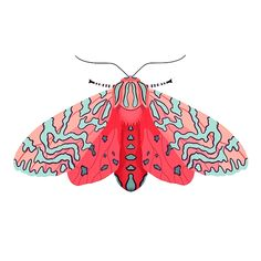 Pink Moth Acrylic Print by Nicole Wilson. All acrylic prints are professionally printed, packaged, and shipped within 3 - 4 business days and delivered ready-to-hang on your wall. Illustration Papillon, Art Et Illustration, Butterfly Illustration, Art Inspo, Inspiration Art, Pink Moth, Art Papillon, Moth Drawing, Posca Art