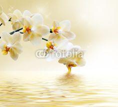 Mooie witte orchidee