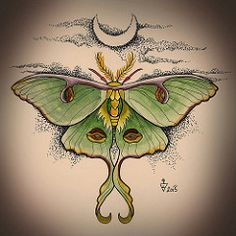 LUNA MOTH - 2015 (Magdalena Sky) Tags: art tattoo illustration watercolor design drawing moth luna watercolour draw