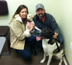 Macadamia – Adopted 02/15/2014 | Labrador Friends of the South