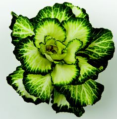 """Ornamental KALE! Use for an arrangement and THEN make some amazing super food kale chips ~ yum! Talk about being """"GREEN"""". #ubloom @JSchwanke"""