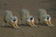 #animals #fox #nature
