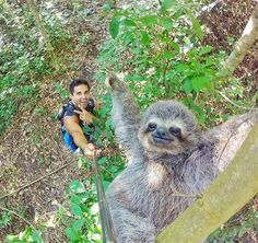 Selfie com bicho-preguiça