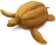 a cantaloupe turtle
