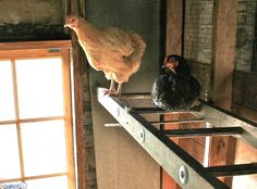 Wooden ladder repurposed into chicken roost I have a couple and considering using them this installation is a bit diff.