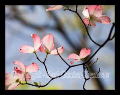Google Image Result for http://www.distantsunartwork.com/Flowers/Dogwoods/pink.dogwood.butterflies.flower.photo.7196.jpg