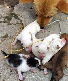 Dog gives birth to cat in Korea! Yep!