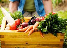 espinaca, cebolla, lechuga, repollo, zanahorias, etc