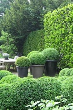 Garden topiary never goes out of style. Topiary creates structure, formality and sculptural focal points in a garden much like a work of art. These garden designs are a perfect example of topiary b…