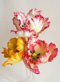 Gumpaste tulip by Iliana Petrova cakesdecor.com/  cake decorating ideas