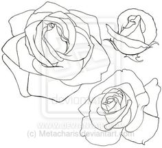 Rose Tattoo by Metacharis on DeviantArt Flower Images, Flower Art, Rose Line Art, Art Sketches, Art Drawings, Drawing Tutorials For Beginners, Realistic Rose, Line Art Vector, Tinta China