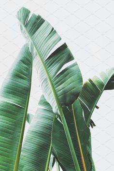 Tropical Jungle Leaves Portrait by René Jordaan Photography on Creative Market - Tropical Jungle Leaves Portrait by René Jordaan Photography on Creative Market - Tropical Art, Tropical Vibes, Tropical Garden, Tropical Leaves, Tropical Plants, Plant Painting, Plant Art, Botanical Art, Botanical Illustration