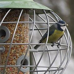 Designed with help from the British Trust for Ornithology, the epoxy-coated steel frame of this modern feeder lets birds in while helping keep squirrels and other predators out. British Garden, British Wildlife, National Geographic, Bird Feeders, Mammals, Habitats, Outdoor Gardens, Spiral, Outdoor Decor