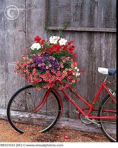 Garden bikes ... kind of a fun concept.