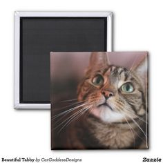 Shop Beautiful Tabby Magnet created by CatGoddessDesigns. Round Magnets, Paper Cover, Store Design, Recycling, Kitty, Cats, Prints, Animals, Beautiful