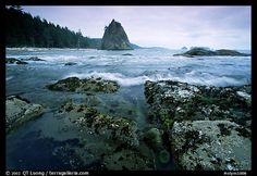 Olympic National Park, WA  Now, I can't help but think of Twilight when I think of the park!