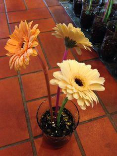 Blomster til doctor progtor premiun 40 bord