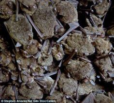 To the bat cave! rare and stunning images..