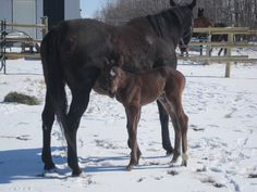 Our new filly born Mar 25