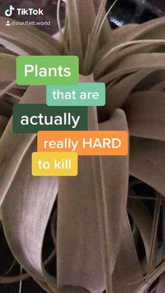 Indoor Garden, Garden Plants, Indoor Plants, Home And Garden, Indoor Plant Decor, Hanging Plants, House Plants Decor, Easy House Plants, Inside Plants