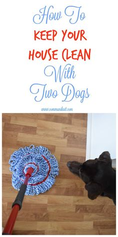 How I Keep My House Clean With Two Dogs #DoTheMicroTwist AD